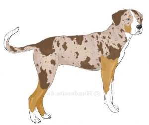 catahoula-leopard-dog