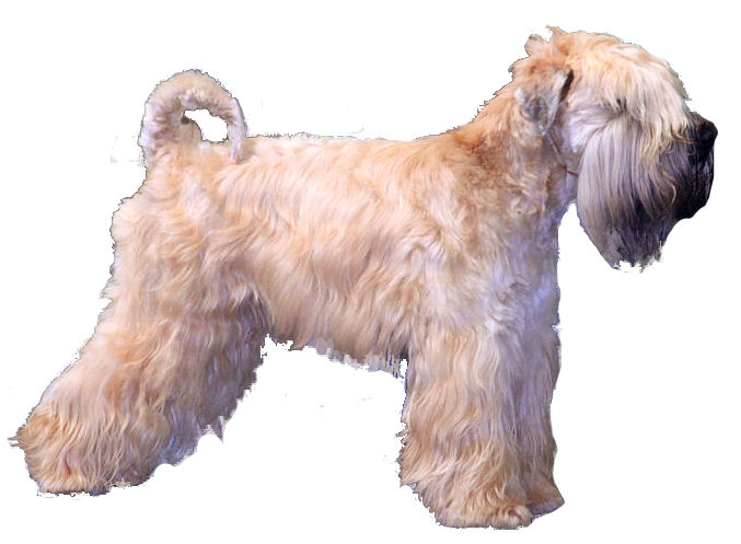 Dog Breeds with Pictures from A to Z | Dog-Breeds.com